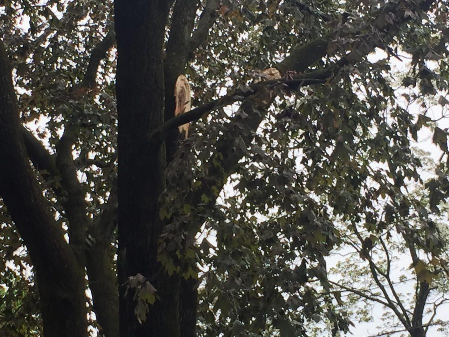 More tree damage.