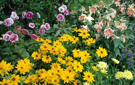 Educator's Corner: The pleasures — and frustrations — of gardening