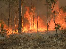 Australia faces rampant bushfires across its six states as one of the worst environmental disasters in its recent history.